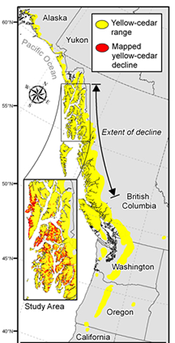 Yellow cedar decline concentrated in Alaska along the Pacific coast
