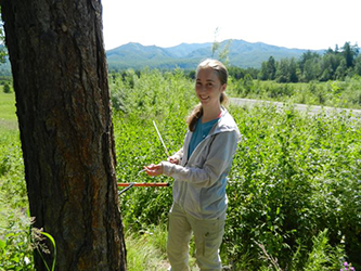 Sarah Frederick '15 coring a larch tree in Kamchatka